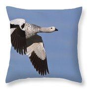 Male Upland Goose Throw Pillow