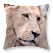 Male White Lion ... Thabo Throw Pillow