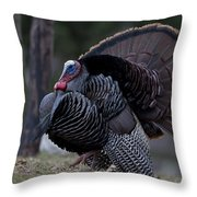 Male Wild Turkey, Meleagris Gallopavo Throw Pillow