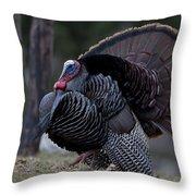 Male Wild Turkey, Meleagris Gallopavo Throw Pillow