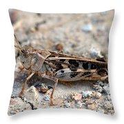 Male Wrinkled Grasshopper Throw Pillow