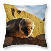 Malibu California Baby Sea Lion Throw Pillow