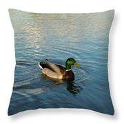 Mallarad Duck 1 Throw Pillow