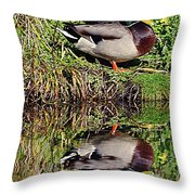 Mallard And Reflection Throw Pillow