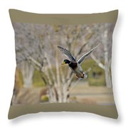 Mallard Approach Throw Pillow
