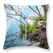 Mallard At Silver Lake Throw Pillow