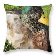 Mallard Close Up Throw Pillow
