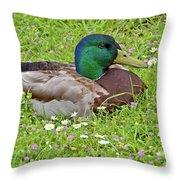 Mallard Drake In The Grass Throw Pillow