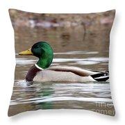 Mallard Drake Throw Pillow