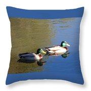 Mallard Drakes In Morning Light Throw Pillow