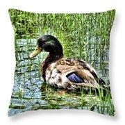 Mallard Duck 1 Throw Pillow