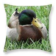 Mallard Duck #2 Throw Pillow