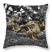 Mallard Duck A4 Throw Pillow