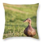 Mallard Duck Anas Platyrhynchos, Female Throw Pillow