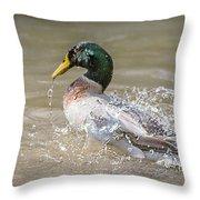 Mallard Duck Bathing Time In Dam Throw Pillow