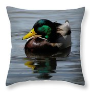 Mallard Duck Drake I Throw Pillow