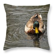 Mallard Duck Drake With Water Droplets On Bill Throw Pillow