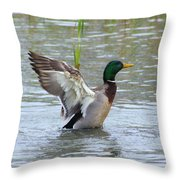 Mallard Duck Landing In Pond Throw Pillow