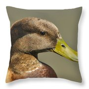 Mallard Duck Variety IIi Throw Pillow