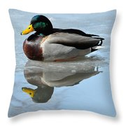 Mallard Duck Drake On Ice II Throw Pillow