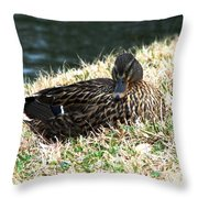Mallard Female 1 Throw Pillow