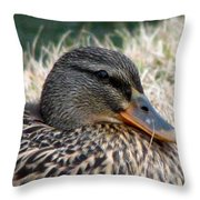 Mallard Female 2 Throw Pillow