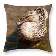 Mallard Hen Throw Pillow