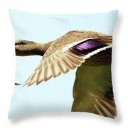 Mallard In Flight . 40d5450 Throw Pillow