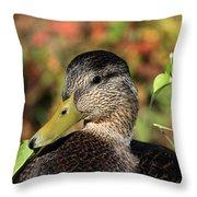 Mallard In The Fall Throw Pillow