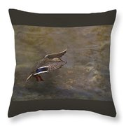 Mallard Landing On Thompson's Pond Throw Pillow