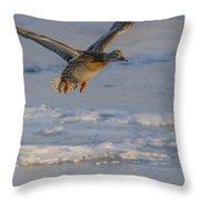 Mallard Landing Over Ice Throw Pillow