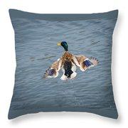 Mallard Male Flying Throw Pillow