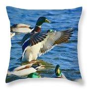 Mallard Throw Pillow
