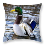 Mallard Moment Throw Pillow