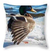 Mallard On Ice Throw Pillow