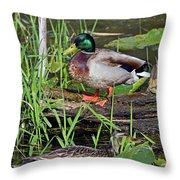 Mallard Pair Throw Pillow