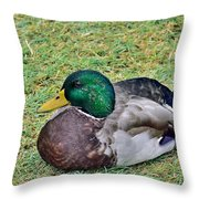 Mallard Resting Throw Pillow