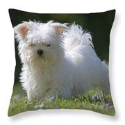 Maltese And Daisy Throw Pillow
