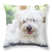 Maltese Dog Is Laying Next To Pile Of Hair Throw Pillow