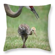 Mama And Juvenile Sandhill Crane Throw Pillow by Carol Groenen