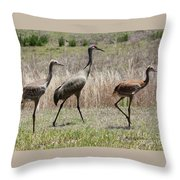 Mama And Two Juvenile Sandhill Cranes Throw Pillow