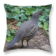 Mama Quail Profile With Ivy Throw Pillow