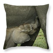 Mama's Milk Bar Throw Pillow