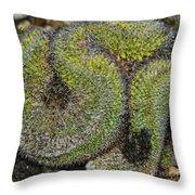 Mammillaria Red Cap Cristata Throw Pillow