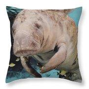 Manatee Swimming Underwater Throw Pillow