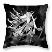 Mandarin Honeysuckle Vine 1 Black And White Throw Pillow