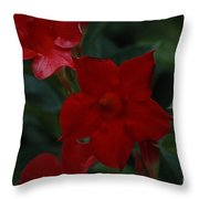 Mandevilla Throw Pillow