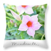 Mandevilla Pink Beauty Throw Pillow