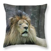 Mane Standing Up Around The Head Of A Lion Throw Pillow