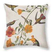 Mango Humming Bird Throw Pillow